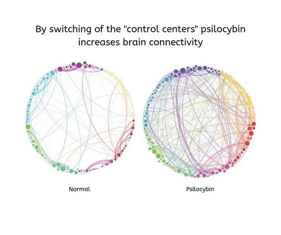 Psilocybin อาจช่วยรักษาภาวะซึมเศร้าได้การศึกษาขนาดเล็กพบ